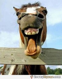 Funny Horse Picture 1